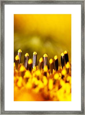 the Miracle of a Single Flower Framed Print by Lisa Knechtel