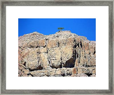 The Miracle Of Life Framed Print by Peter Waters