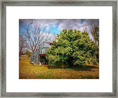 The Miracle Tree Framed Print by Linda Unger