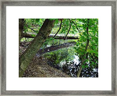 Framed Print featuring the photograph The Mirrored Tree by Deborah Fay