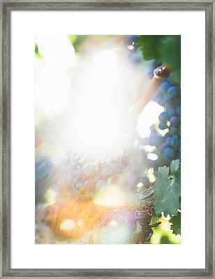 The Modern Grape 1 Framed Print