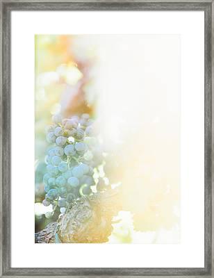 The Modern Grape 2 Framed Print
