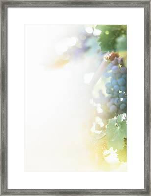 The Modern Grape 3 Framed Print
