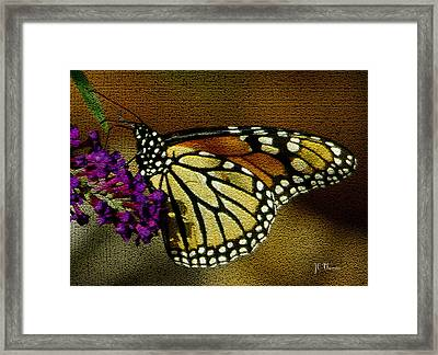 The Monarch / Butterflies Framed Print