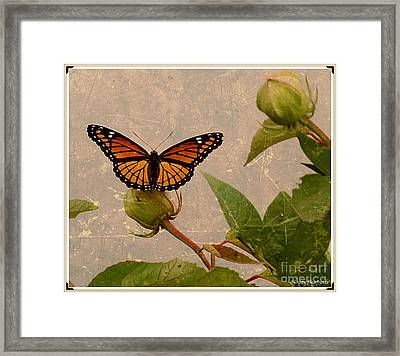 The Monarch Framed Print by Christy Ricafrente