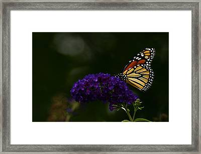 The Monarch Rules Framed Print