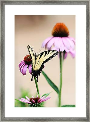 Framed Print featuring the photograph The Swallowtail by Trina  Ansel