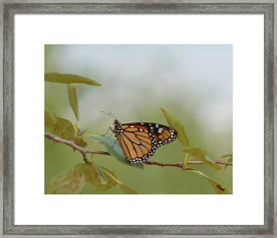 The Monark Framed Print by Rhonda Humphreys