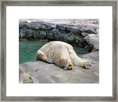 The Morning After Framed Print by Cindy Haggerty