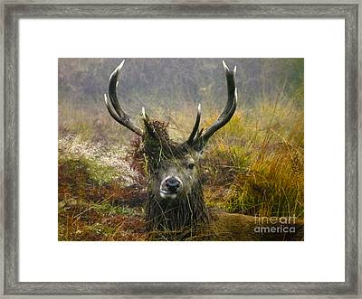 Stag Party The Series The Morning After Framed Print