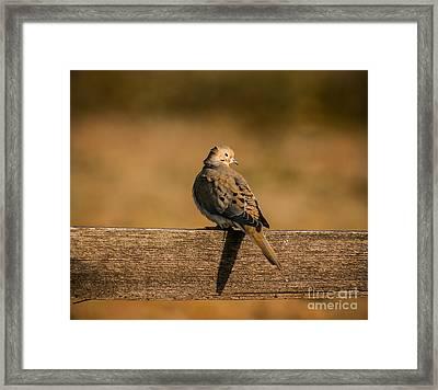 The Morning Dove Framed Print by Robert Frederick