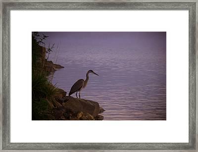 The Morning Hunt Framed Print