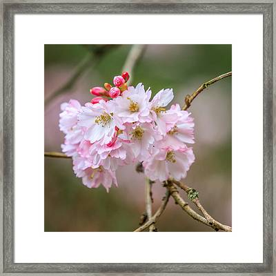 The Morning Of Spring Framed Print