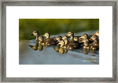 The Morning Rush Framed Print