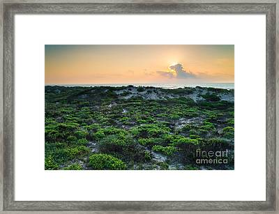 The Morning Sun And The Green Seashore Framed Print
