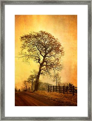 The Morning Tree Framed Print