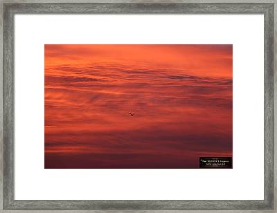 The Morning View 4 Framed Print