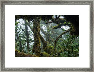 The Mossy Forest Of The Cameron Highlands Framed Print