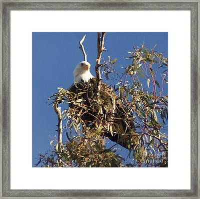 Framed Print featuring the photograph The Most Magnificant Bird by Debby Pueschel
