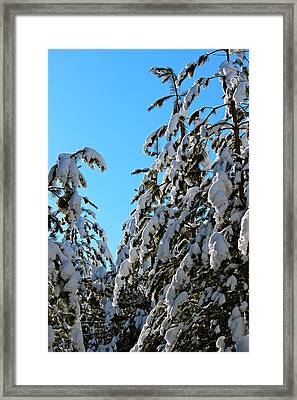 The Mourning After Framed Print by David Pickett