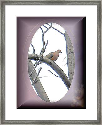 The Mourning Dove Framed Print by Patricia Keller