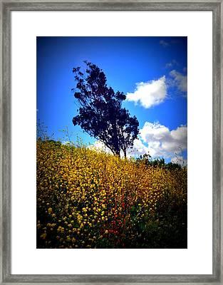 The Mustard Hillside Framed Print by Lisa Holland-Gillem
