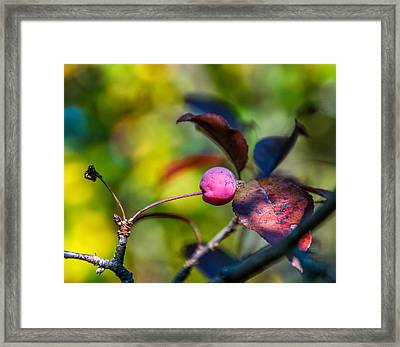 The Mysteries Of Autumn Framed Print