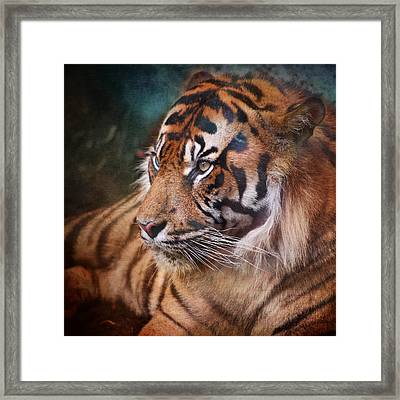 The Mysterious Eye Of The Tiger Framed Print