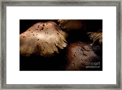 The Mysterious Fungus Framed Print by Jolanta Meskauskiene