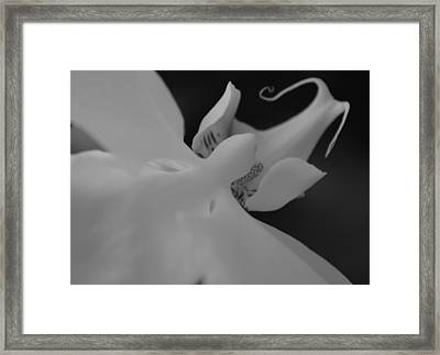 The Myth Of Orchis II Framed Print by Tara Miller