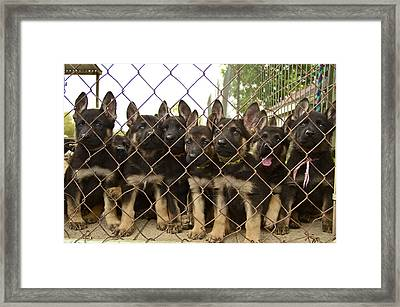 Framed Print featuring the photograph The N Litter by John Babis