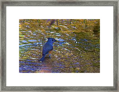 Framed Print featuring the photograph The Naiad by Gary Holmes