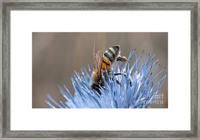 The Naturalist Framed Print