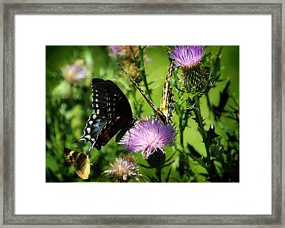 The Nectar Seekers Framed Print by Rebecca Sherman