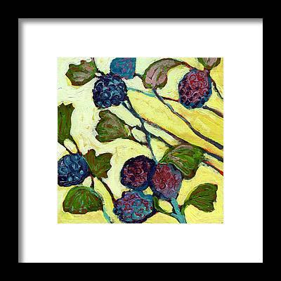 Blackberries Framed Prints