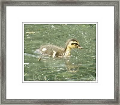 The New Addition Framed Print by Sara  Raber