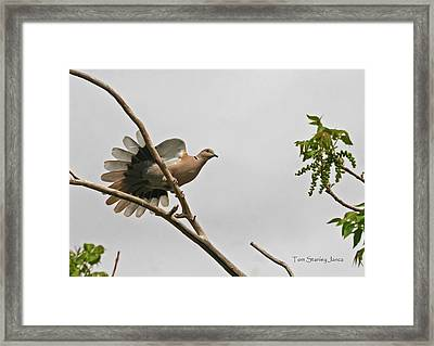 Framed Print featuring the photograph The New Dove In Town by Tom Janca