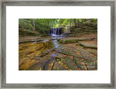 The New Fall  Framed Print by Darren Wilkes