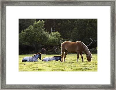The New Forest  Framed Print by Angel  Tarantella