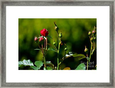 The New Generation Framed Print