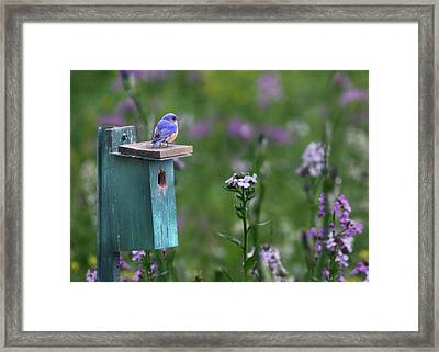 The New Landlord Framed Print by Lori Deiter