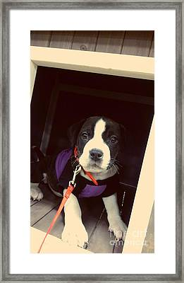 The New Puppy Framed Print by Denisse Del Mar Guevara