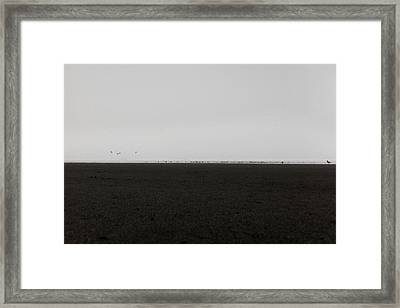 The No2 Ocean Shores Framed Print by Marcello Cicchini