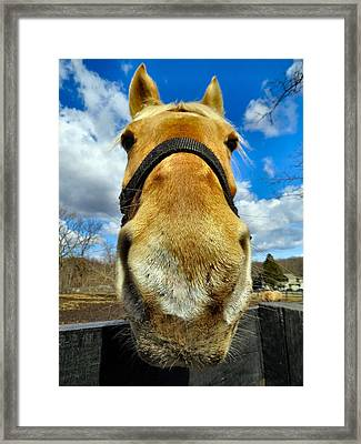 The Nose Knows Framed Print by Art Dingo
