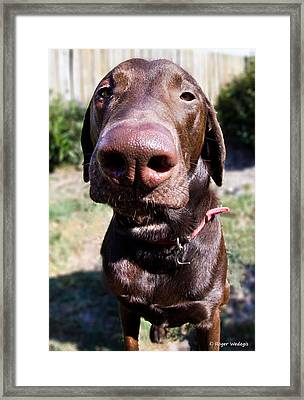 The Nose Knows Framed Print by Roger Wedegis