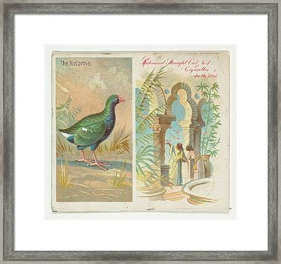 The Notornis, From Birds Of The Tropics Framed Print