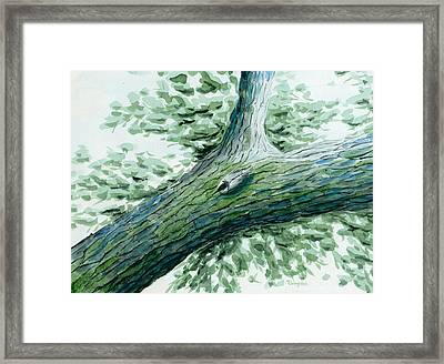 The Nuthatch Framed Print