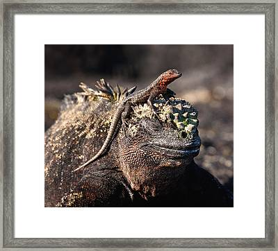 The Odd Couple Framed Print by June Jacobsen