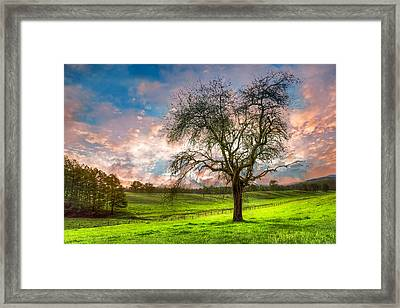 The Old Apple Tree At Dawn Framed Print by Debra and Dave Vanderlaan