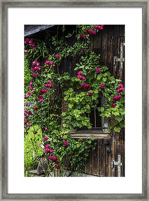 The Old Barn Window Framed Print by Debra and Dave Vanderlaan